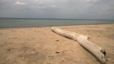 Sun bleached logs lined the sand